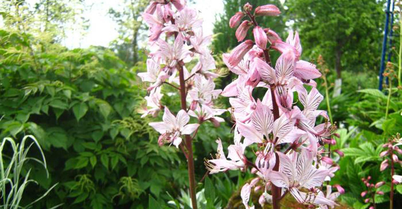 Ядовитые цветы крым